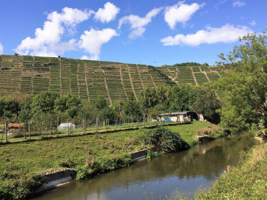 PM13-River-Enz-and-vinyards-on-hill