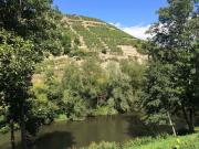 PM14-River-Enz-and-vinyards-on-hill